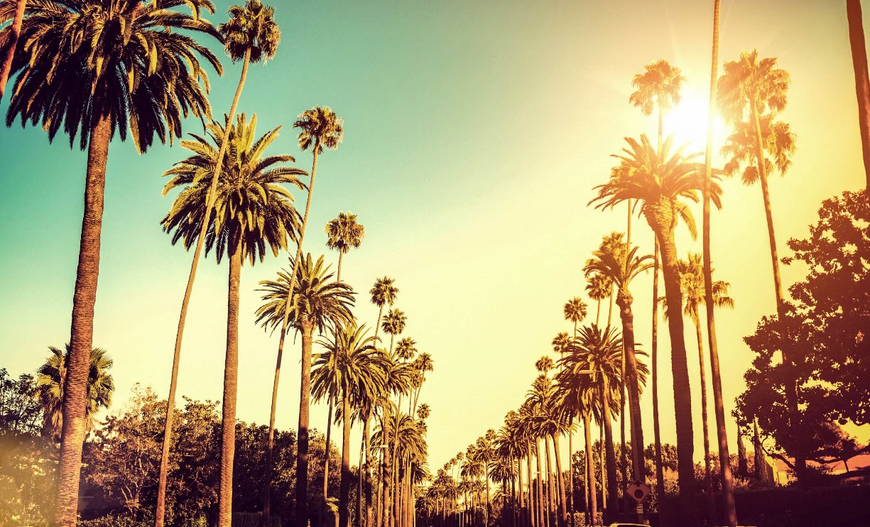 Palm-Trees-Hollywood-Los-Angeles_portada