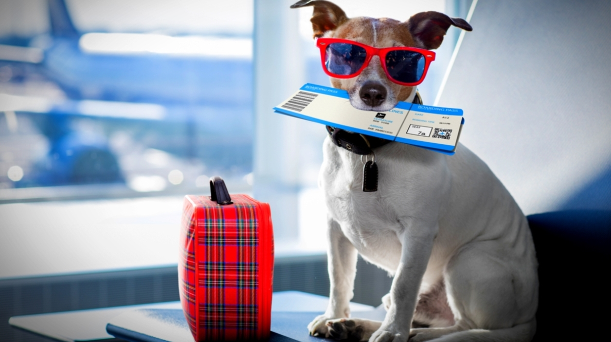 title-dos-and-donts-of-traveling-with-pets-by-javier-brosch-shutterstock