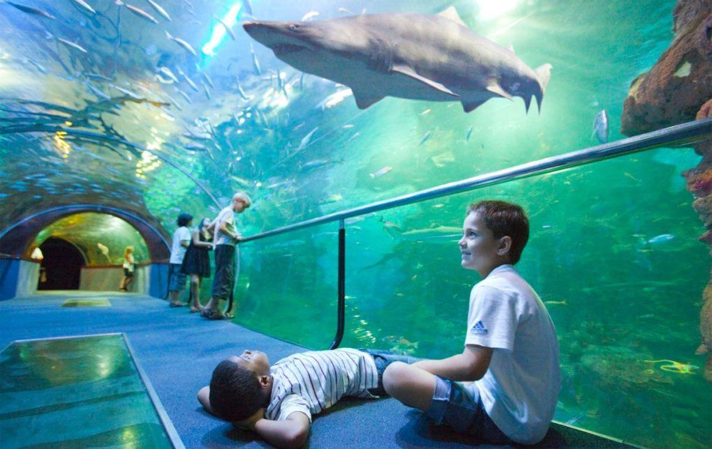-San-Sebastián-Aquarium